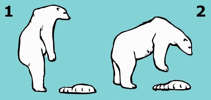 polar bear posture