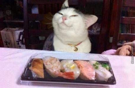 cat sushi 2