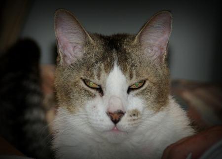 cat-398316_1280